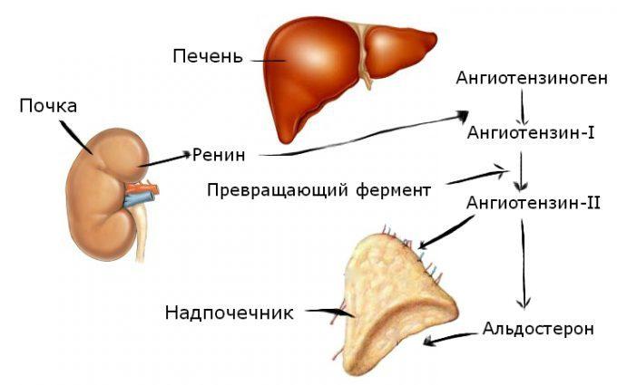 magas vérnyomás elleni gyógyszerek szoptatás alatt