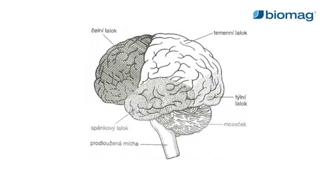 magas vérnyomású fizikai aktivitással magas vérnyomás epilepsziával