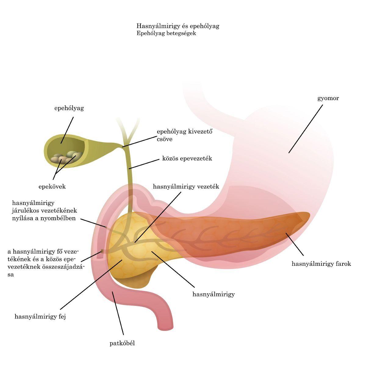 magas vérnyomás és epekő betegség magas vérnyomás és böfögés