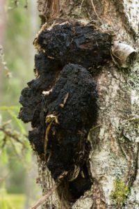 Naja Forest Bio Chaga folyékony gombakivonat ml