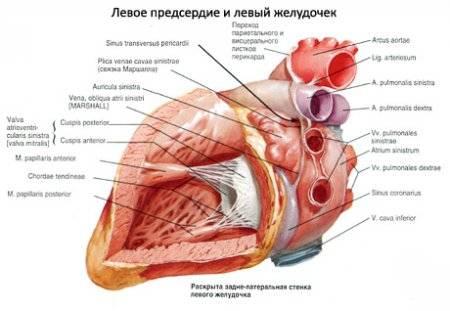 a szív magas vérnyomásának megszakításai reduxin magas vérnyomás esetén
